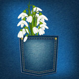 Denim pocket with snowdrop Stock Images