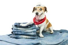 Denimsammlung für Haustier Stockfoto