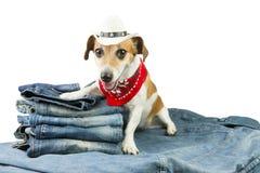 Denimsammlung für Haustier Lizenzfreies Stockfoto