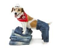 Denimsammlung für Haustier Lizenzfreie Stockfotos