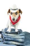 Denimsammlung für Haustier Stockbild