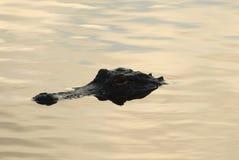 Denizens van Everglades Stock Afbeeldingen