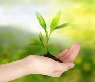 Denk Groen Het concept van de ecologie Stock Afbeelding