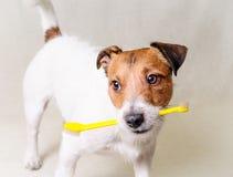 Denk over dog& x27; s tandengezondheid en tandzorg Stock Afbeelding