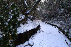 Denk sneeuw op wandelingssleep wordt behandeld in de winter die Stock Foto's