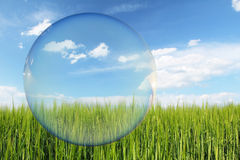 Denken Sie grünen Aufkleber, grünes Feld und blauen Himmel Stockbild