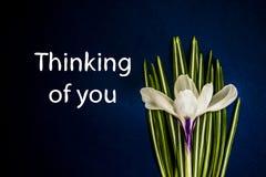 Denken an Sie Krokus mit Blättern auf einem dunkelblauen Hintergrund lizenzfreie abbildung