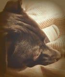 Denkend Puppy stock afbeeldingen