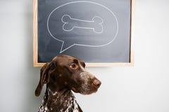 Denkende hond Royalty-vrije Stock Foto's