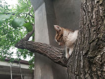 Denkende kat stock foto's