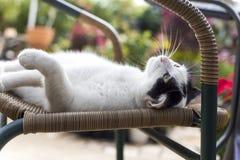Denkende Katze Lizenzfreie Stockbilder