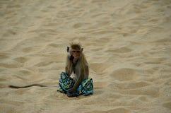 Denkender Affe, der auf tragender Hose eines Strandes sitzt Stockfoto