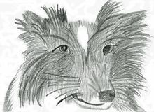 Denkendes Border collie - Bleistift-Zeichnung Stockfotografie