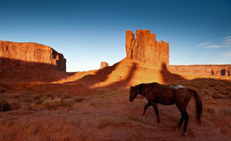 Denkmal-Tal-Pferd Stockfotografie