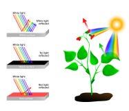 Denkt na en absorbeert Spectrum van Kleuren en Sunli Royalty-vrije Stock Fotografie