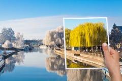 Denkwürdiger Bildsommer-Weidenbaum gegen Winter Stockbilder