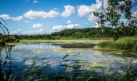 Lake. Countryside with waterway against blue skies on sunny day in Denmark Royalty Free Stock Images