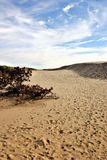 Denmark desert Stock Images