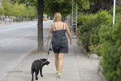 DENMARK_FEMALE DOG WALKER Royalty Free Stock Photography