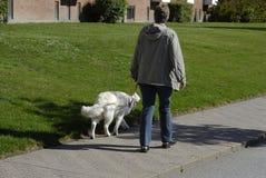 DENMARK_PET步行者 库存照片