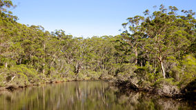 Denmark River. The Denmark River flows through indigenous forest at the town of Denmark in Western Australia Royalty Free Stock Photos