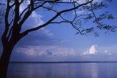 Denmark - Tree and sea Royalty Free Stock Photo