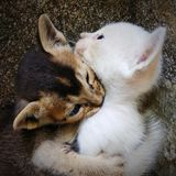 Denna är bilden av kattungar royaltyfri bild