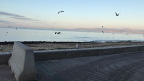 Denna är den Arenal stranden på vintern lager videofilmer