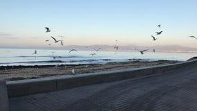 Denna är den Arenal stranden på vintern arkivfilmer