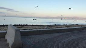 Denna är den Arenal stranden på vintern stock video