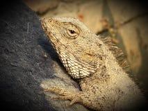 Denna är den trevliga klicken för draken Arkivbild