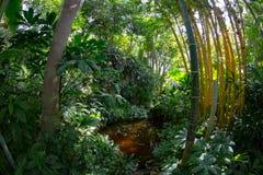 Bambu och damm Royaltyfri Bild