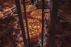 Denna är skörden av persimonet Arkivfoton