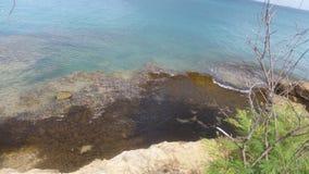 Denna świrzepa oprócz skały natury robi jej pracie obraz stock