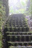 Denna bana har moment i regnskogen i Costa Rica royaltyfria foton
