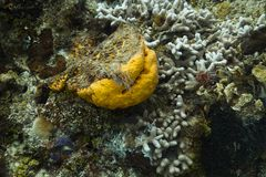 Denna gąbka i bielący koral Zdjęcie Stock