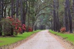 Grusväg i Lowcountry South Carolina arkivfoton