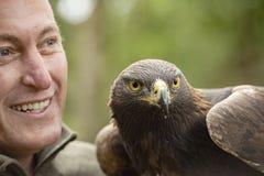 Denna guld- Eagle i del av ett avel- & beskyddprogram I arkivfoto