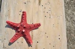 Denna gwiazda na beli Fotografia Stock