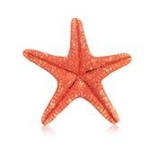 Denna gwiazda na bielu zdjęcia stock