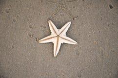 Denna gwiazda na piaskowatej plaży Obraz Royalty Free