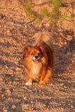 Denna hund är den passande modellen royaltyfri fotografi