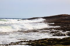 Denna kipiel i kiść na plaży Fotografia Stock