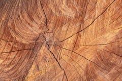 Denna mitt av trädet Royaltyfria Bilder