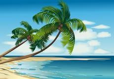 Denna palma Zdjęcie Stock