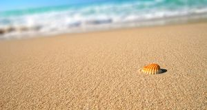 denna plażowa skorupa tropikalna Fotografia Royalty Free