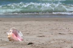 denna plażowa skórki Obrazy Stock