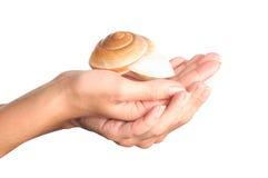 denna ręki skorupa Zdjęcie Stock