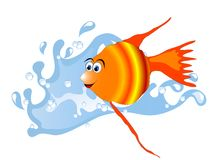 Denna ryba Zdjęcie Royalty Free