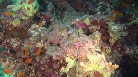 Denna ryba angthong park narodowy denny Thailand widok Podwodny wideo Woda nurkowy underwater zdjęcie wideo